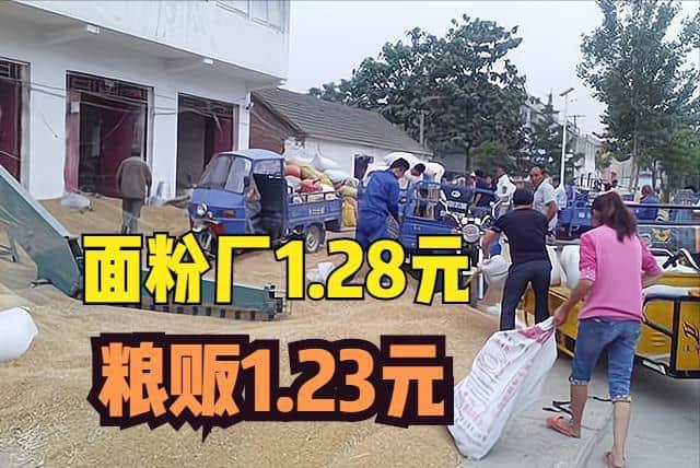 同样的小麦,面粉厂1.28元/斤,粮贩1.23元/斤,为何?卖给谁好?