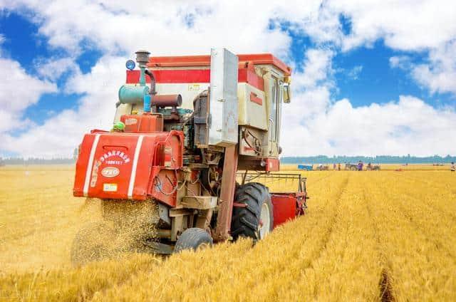 小麦高位震荡,将要突破1.35?