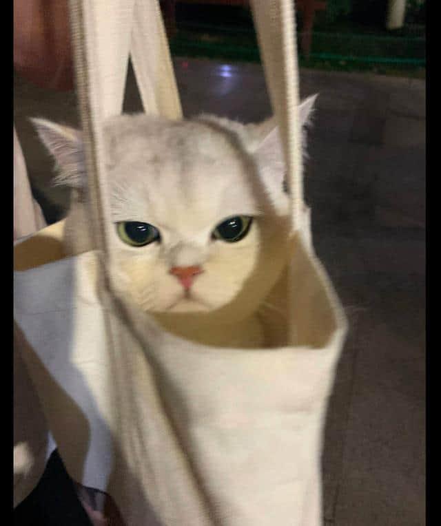 把猫咪装进帆布袋?
